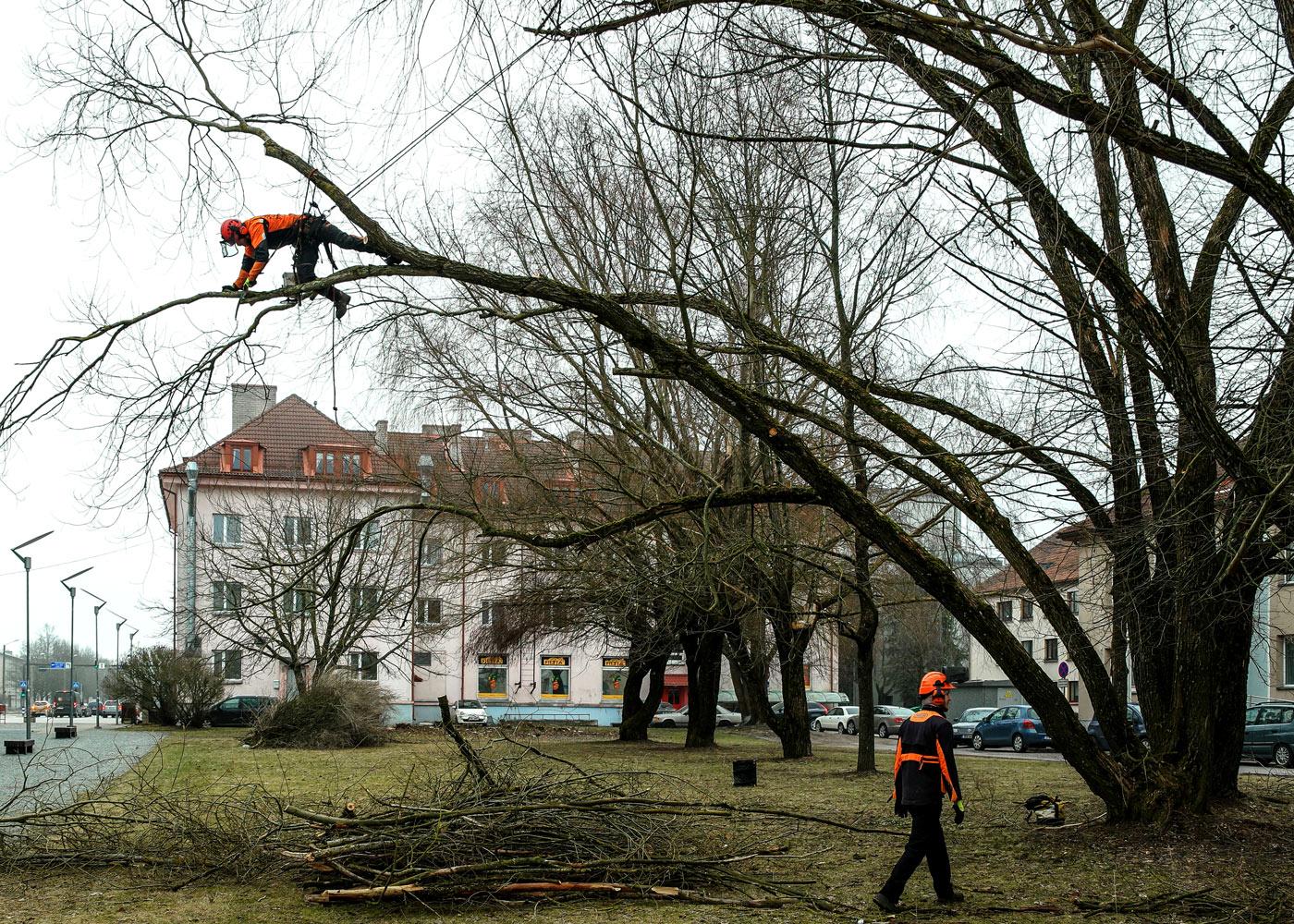 Puude hooldus linnas.